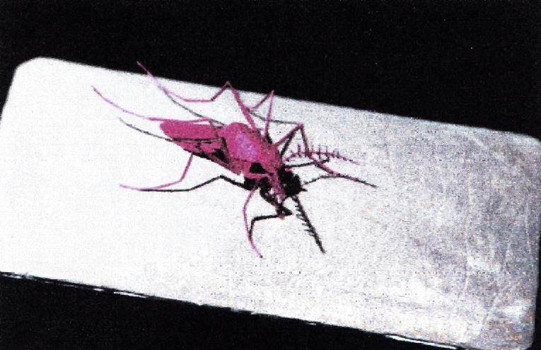 紙で作られた赤い昆虫