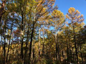 清水高原の広葉樹