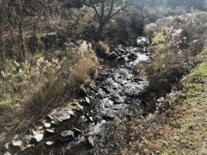 ヤマメやイワナが生息する清流「小曽部川」