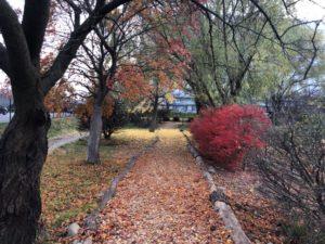 木々の配置は色の濃淡を意識しているのかも?