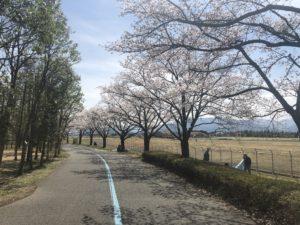 桜の下にはお花見客が集まる