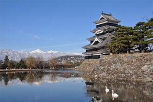 松本城と白鳥のつがい