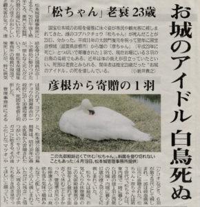 松本城の白鳥「松ちゃん」死亡の記事