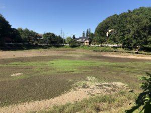 2019年9月時点の小坂田池