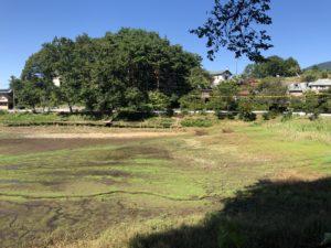 かつてないほど干上がった小坂田池