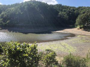 もはや水たまりレベルの小坂田池