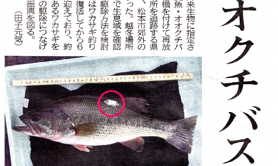美鈴湖、ワカサギ釣りに悪影響となるブラックバスの駆除調査を開始へ